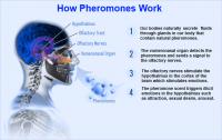 Nước hoa cao cấp dành cho nam Pheromone Slim Fresh